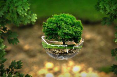 С чего начинается осознанное отношение к природе?