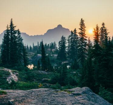Философия синрин-йоку: исцеляющая сила леса